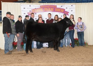 Junior Simmental Grand Champion Heifer -- SHCC KLC I'll Bea Star, exhibited by PJSA member Scott Snyder, Titusville, Crawford Co. on Sunday, Jan. 11, at the 2015 Pennsylvania Farm Show. (L-R): Kyle Fleener, Ethan Whiteside, Kelly Dietrich, Kelsey Delaplain, William Price, Jessica Snyder, Dave Snyder, judge Chris Cassady, Monica Debroski, Maria Angelo, Raymond Biebel, Makayla Stone, and Scott Snyder