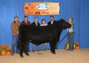 Grand Champion SimGenetics Bull -- Mr Americas Boulder Boy owned by Lynn Korns , K&K Cattle Co, Hyndman, PA