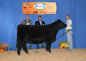Grand Champion SimGenetics Female -- Hara's Miss Princess 7B owned by Clayton Main, Schaeffer Show Cattle, Hagerstown, IN