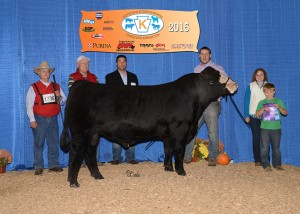 Grand Champion Simmental Bull -- SSC Shell Shocked 44B owned by PSA member Greg Stewart, Stewart's Simmental Cattle, Halifax, PA