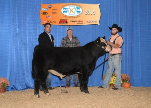 Reserve Grand Champion SimGenetics Bull -- FREYS WRANGLER owned by Freddy Frey, Frey Family Angus, Drumore, PA
