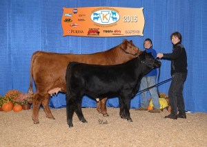 Reserve Champion SimGenetics Cow/Calf -- PVSM Freedom To Dream owned by PSA member Laurie Meyers, Powell's Valley Simmentals, Halifax, PA