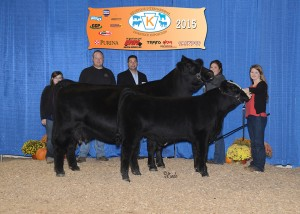 Reserve Champion Simmental Cow/Calf -- HPF Red Infinity X532 owned by Bethany Johnson, Harvester Farm, Remington, VA